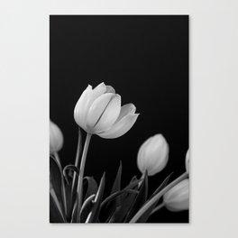 White Tulips Canvas Print
