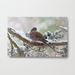 Peaceful Winter Dove Metal Print