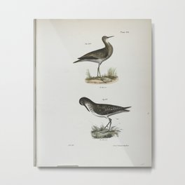 1359 209 The Grey Plover (Totanus bartrami) 210 The Solitary Tatler (Totanus chloropygius)26 Metal Print