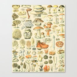 Mushroom Diagram // Champignons II XL by Adolphe Millot 19th Century Science Textbook Artwork Canvas Print