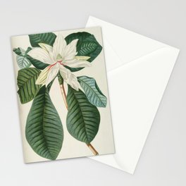Botanical Magnolia Stationery Cards