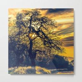 Evensong - A Golden Sierra Sunset Shines Through an Oak Tree Metal Print