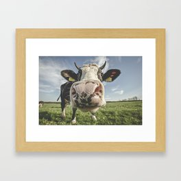 Inquisitive Cow Framed Art Print