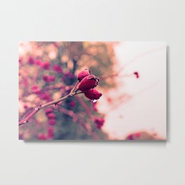 Berrys in the November rain Metal Print