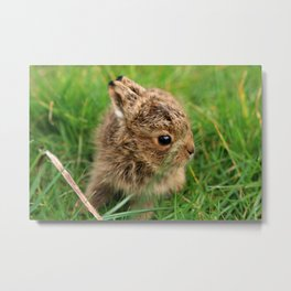Leveret In The Grass Metal Print