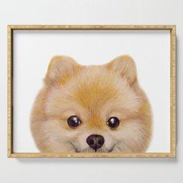Pomeranian Dog illustration original painting print Serving Tray