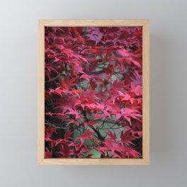 Japanese Maple Framed Mini Art Print