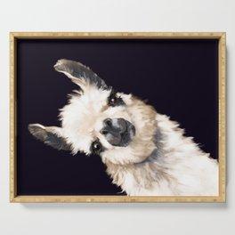 Sneaky Llama in Black Serving Tray