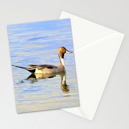 Handsome Pintail  Duck by Reay of Light  Stationery Cards