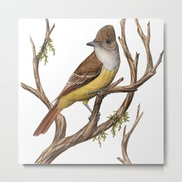 Great Crested Flycatcher (Myiarchus crinitus) Metal Print