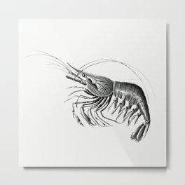 Vintage prawn marine life illustration 5 Metal Print
