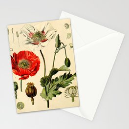 Poppy picture from 1900 Stationery Cards