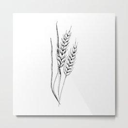 Wheat sketch. Hand drawn spike of wheat. Monochrome. Black and white Metal Print