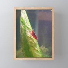 Cherry Shrimp Seeking Love Framed Mini Art Print