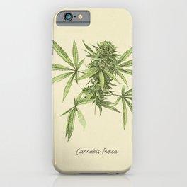 Vintage botanical print - Cannabis iPhone Case