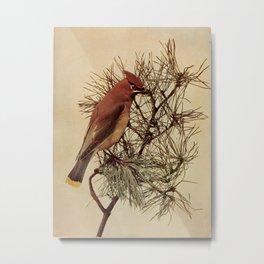 Neltje Blanchan - Bird Neighbours (1903) - Cedar Waxwing Metal Print