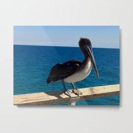 Florida pelican Metal Print