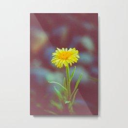 yellow bloom Metal Print