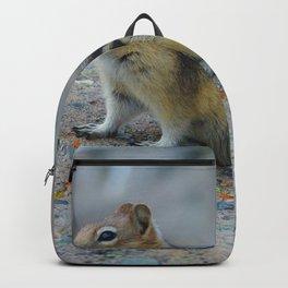 Golden mantled ground squirrel in Jasper National Park | Canada Backpack