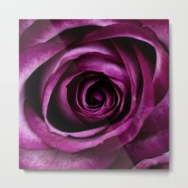 rose mauve plant 5 Metal Print