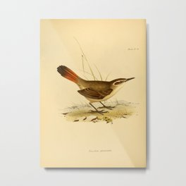 The Zoology of the Voyage of HMS Beagle 1840 - Birds 21: Eremobius phoenicurus Metal Print