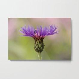 Purple Mountain Cornflower Metal Print