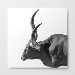 Ankole-Watusi | Animal Photography Metal Print
