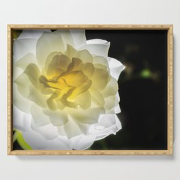 Glowing Rose 2 Nature / Floral / Botanical Photograph Serving Tray