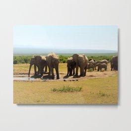 Elephants at the waterhole Metal Print