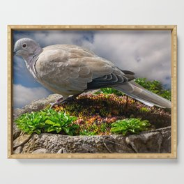 Collared Dove Serving Tray
