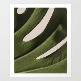 Monstera 01 Art Print