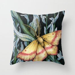 A Chickweed Geometer Moth Throw Pillow