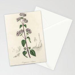 Oregano (Origanum vulgare) illustration from Medical Botany (1836) by John Stephenson and James Mors Stationery Cards