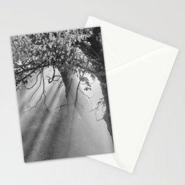 Sunrays Through The Oaks. Sierra Nevada BW Stationery Cards