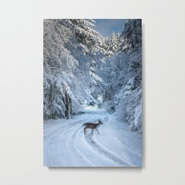 Winter Wildlife III - Deer Fawn Forest Adventure Nature Photography Metal Print