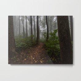 Smoky Mountain Summer Forest IX - National Park Nature Photography Metal Print