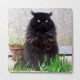 King cat owl Pomponio Mela Metal Print