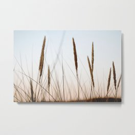 Beach grass III | Calm natural fine art print | Netherlands Metal Print