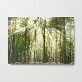 Sun Rays Through Treetops Inspirational Landscape Photo Metal Print