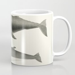 1 Humpback whale (Megaptera versabilis) 2 Minke whale (Balaenoptera davidsoni) from Natural history Coffee Mug