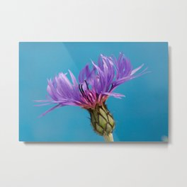 Purple Mountain Cornflower No.2 Metal Print