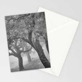 Cork oaks. Foggy sunrise at the mountains. BW. Square Stationery Cards
