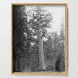 """""""Grizzley Giant"""", a Big Tree in Mariposa Grove in Yosemite National Park, California, ca.1902 Serving Tray"""