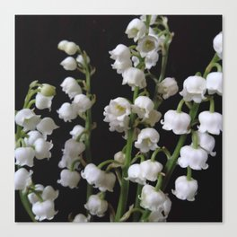 lily of the valley 5 Canvas Print