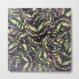 Malachite butterflies (Siproeta stelenes) Art Print Metal Print