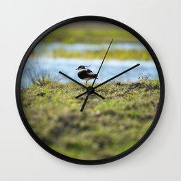 Northern lapwing Wall Clock