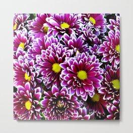 Purple Pink  Dbeahlias Metal Print