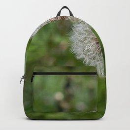 Shower head, infruttescence of the dandelion flower Backpack
