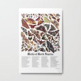 Moths of North America Metal Print