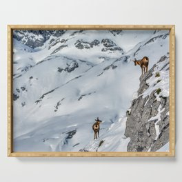 Chamois in the snow on the peaks of the National Park Picos de Europa in Spain. Serving Tray